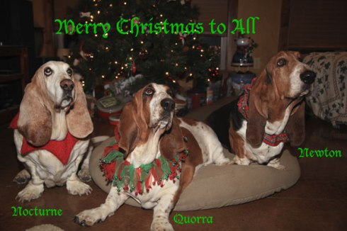 BassetsStudioGreetings