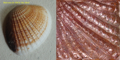 ReferenceR2C2SeaShell